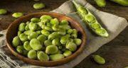 خواص باقلا پخته در طب سنتی ؛ فواید باقلا پخته شده در طب سنتی
