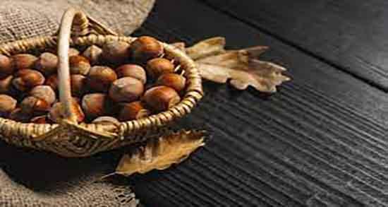 خواص فندق و عسل ؛ خاصیت فندق و عسل در طب سنتی چیست