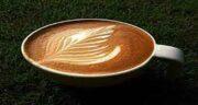 خواص قهوه اسپرسو برای کبد ؛ مضرات قهوه اسپرسو برای کبد