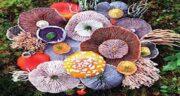 خواص قارچ در طب اسلامی ؛ فواید قارچ از نظر طب سنتی چیست