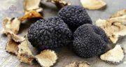 خواص قارچ دنبلان کوهی برای اسپرم ؛ فواید مصرف قارچ دنبلان کوهی