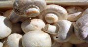 خواص قارچ کبابی برای کودکان ؛ سوپ قارچ کبابی برای نوزاد ده ماهه