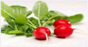 خواص تربچه برای دیابت ؛ فواید مصرف تربچه برای قند خون