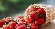 خواص توت فرنگی در شیردهی ؛ توت فرنگی در دوران شیردهی