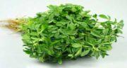 خواص مرزنجوش در بارداری ؛ فواید گیاه مرزنجوش به عنوان دارو در زمان بارداری