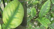 خواص منیزیم در گیاه ؛ تاثیرات منیزیم برای رشد گیاهان