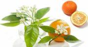خواص نارنج برای جوش صورت ؛ روش استفاده از نارنج برای درمان جوش و آکنه