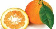 خواص نارنج در دوران بارداری ؛ خاصیت درمانی خوردن نارنج برای دوران بارداری