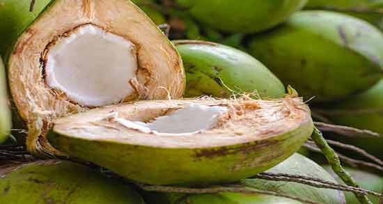 خواص نارگیل سبز ؛ درمان دیابت ، سرطان و کاهش چربی بدن با خوردن نارگیل سبز