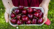 خواص گیلاس برای سرطان ؛ خاصیت ضد سرطانی بودن خوردن میوه گیلاس