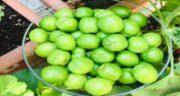 طبع گوجه سبز ؛ آشنایی با خواص و طبع گوجه سبز