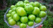 عوارض گوجه سبز ؛ بررسی عوارض و مضرات خوردن گوجه سبز