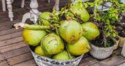 فصل نارگیل ؛ در کدام فصل نارگیل تازه به بازار می آید