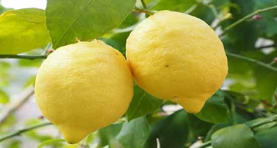 فواید لیمو سنگی ؛ آشنایی با خواص لیمو سنگی برای سلامتی و زیبایی