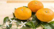 فواید نارنج برای لاغری ؛ کمک به کاهش وزن و چربی سوزی با مصرف نارنج