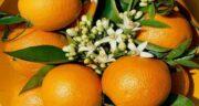 مضرات نارنج در بارداری ؛ آشنایی با عوارض و مصرف نارنج برای زن باردار