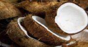 مضرات نارگیل برای قلب ؛ آشنایی با مضرات مصرف نارگیل برای بیماری های قلبی