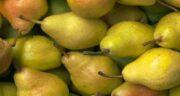 مضرات گلابی در طب سنتی ؛ همه چیز درباره مضرات و عوارض خوردن گلابی