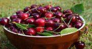 مضرات گیلاس ؛ آیا خوردن میوه گیلاس ضرری هم برای بدن دارد؟