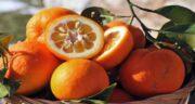 نارنج برای اسهال ؛ درمان خانگی اسهال با مصرف نارنج