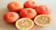نارنج برای زن باردار ؛ آشنایی با خاصیت مصرف نارنج برای سلامت دوران بارداری