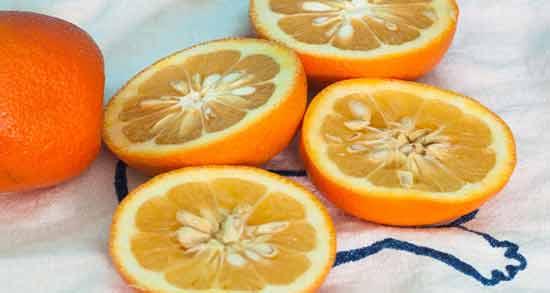 نارنج برای چربی خون ؛ کاهش فشار خون و چربی خون با مصرف نارنج