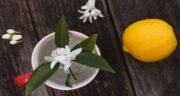 نارنج در بارداری ؛ خواص و مضرات مصرف نارنج برای زنان باردار