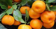 نارنگی برای کرونا ؛ خاصیت خوردن میوه نارنگی برای درمان بیماری کرونا