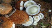 نارگیل برای تب ؛ کاهش تب و حرارت بدن با خوردن نارگیل