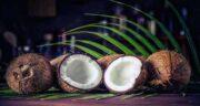 نارگیل و سرماخوردگی ؛ افزایش مقاومت بدن در برابر سرماخوردگی با خوردن نارگیل
