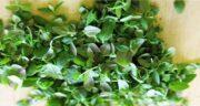 کاکوتی و خواص آن ؛ آشنایی با خواص گیاه کاکوتی و کاربردهای آن برای سلامتی