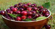 گیلاس و اسید اوریک ؛ مصرف گیلاس میزان اسید اوریک خون را کاهش میدهد