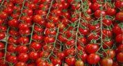 گوجه فرنگی برای پوست صورت ؛ تاثیر گوجه فرنگی برای پوست صورت