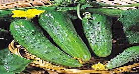 ویتامین خیار ؛ ویتامین خیار برای پوست های خشک و لک دار