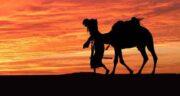 ادرار شتر در قرآن ؛ آیا در آیات قرآن به خواص ادرار شتر اشاره ای شده است؟