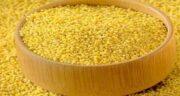 ارزن برای فنچ ؛ ارزن به عنوان غذایی مفید برای تغذیه فنچ