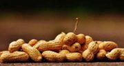 بادام زمینی در بارداری طب سنتی ؛ خواص و مضرات مصرف بادام زمینی در بارداری