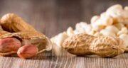 بادام زمینی و یبوست ؛ بررسی خواص و مضرات خوردن بادام زمینی برای یبوست