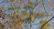 خواص ادرار انسان برای درختان ؛ ادرار انسان به عنوان کودی مناسب برای رشد درختان