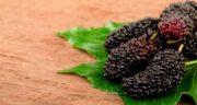 خواص توت سیاه برای پوست صورت ؛ حفظ سلامت و شادابی پوست با توت سیاه