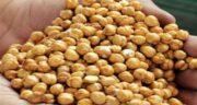 خواص نخودچی برای کودک ؛ وجود کلسیم و آهن در نخودچی مفید برای کودکان
