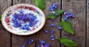 خواص گل گاوزبان برای سرماخوردگی ؛ ویتامین C موجود در گل گاوزبان مفید برای درمان سرماخوردگی