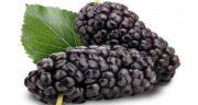 طبع توت سیاه ؛ آشنایی با خواص درمانی و طبع توت سیاه