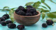 فرق توت سیاه با شاتوت ؛ چه تفاوت هایی بین توت سیاه با شاتوت وجود دارد