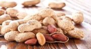 مضرات بادام زمینی برای کبد چرب ؛ آیا خوردن بادام زمینی برای کبد چرب مضر است
