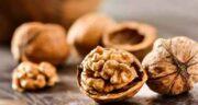مضرات گردو ؛ بررسی عوارض و مضرات خوردن گردو برای سلامتی