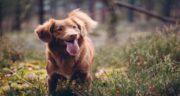 نخودچی برای سگ ؛ آیا می توان به سگ ها نخودچی داد؟