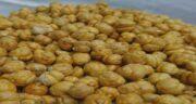 نخودچی برای لاغری ؛ کمک به کاهش وزن و لاغری با خوردن نخودچی