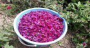 گل گاوزبان در ماه اول بارداری ؛ خطر سقط جنین با خوردن گل گاوزبان در اوایل بارداری