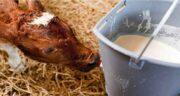 آغوز در طب سنتی ؛ خواص آغوز گوسفندی برای انسان در طب سنتی